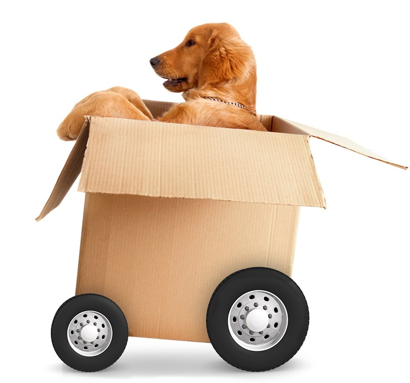 Keep Your Pets Safe During Your Move with These Tips!