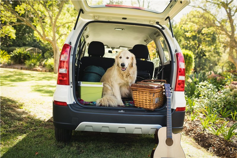 4 Ways to Prepare Your Pet for a Move