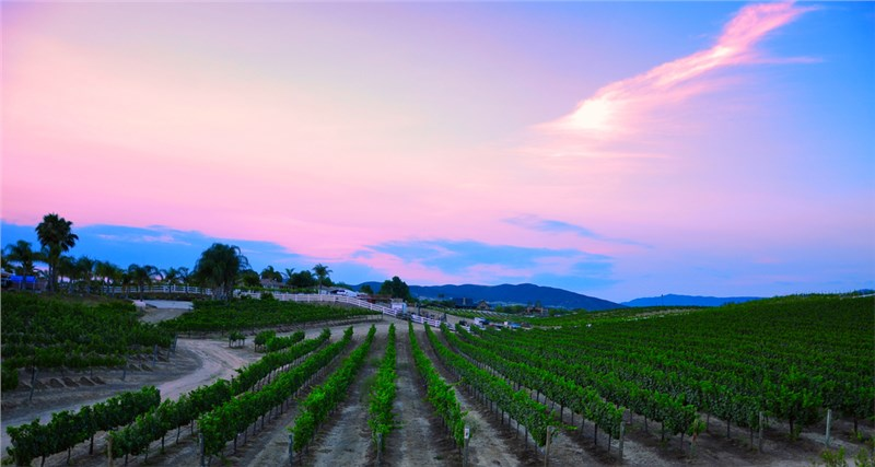 Temecula's Must-See Wineries and Attractions