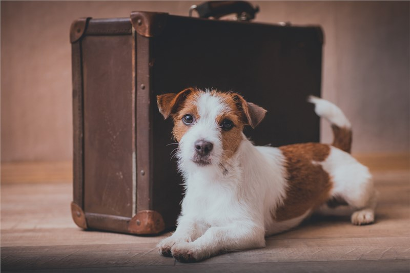 Preparing Your Pets for an International Move in 4 Easy Steps