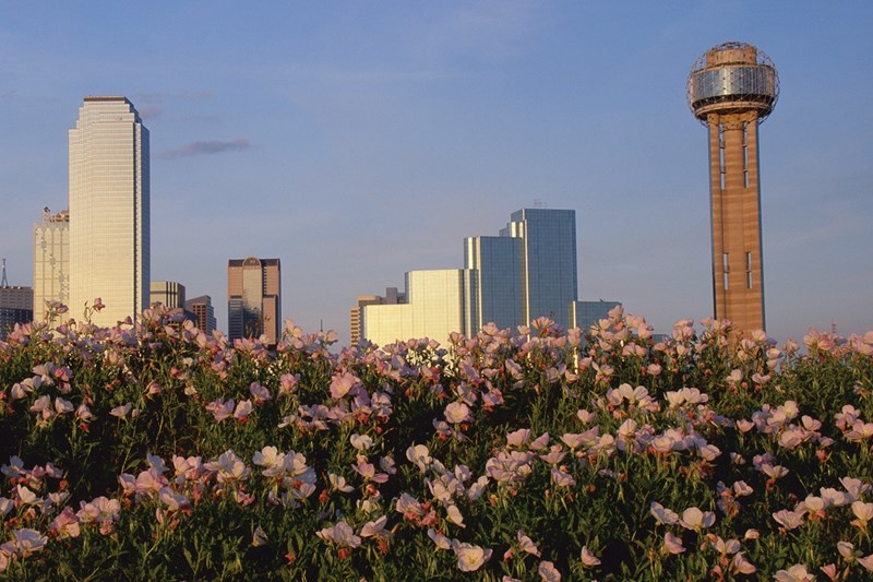 Dallas Suburbs, Allen and Flower Mound, Are the Perfect Destinations for Your Family