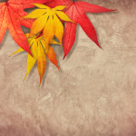 Things to Keep in Mind When Moving During Fall