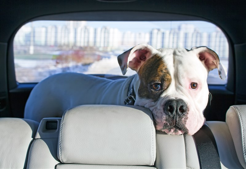 5 Ways to Help Your Pets Enjoy the Car Ride Home