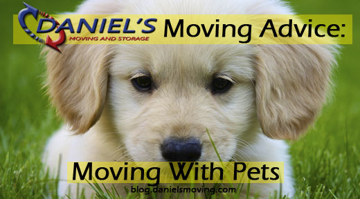Moving Advice: Moving With A Pet
