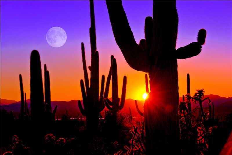 5 Parks You Have to Explore in Tucson