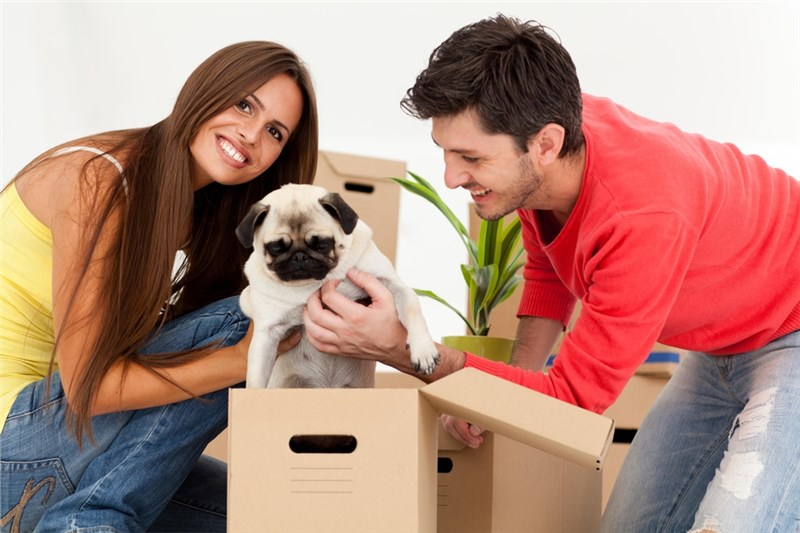 Prepping Your Pets for Moving Day