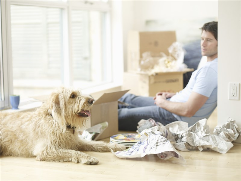 4 Tips to Make Your Move Comfortable for Your Pet