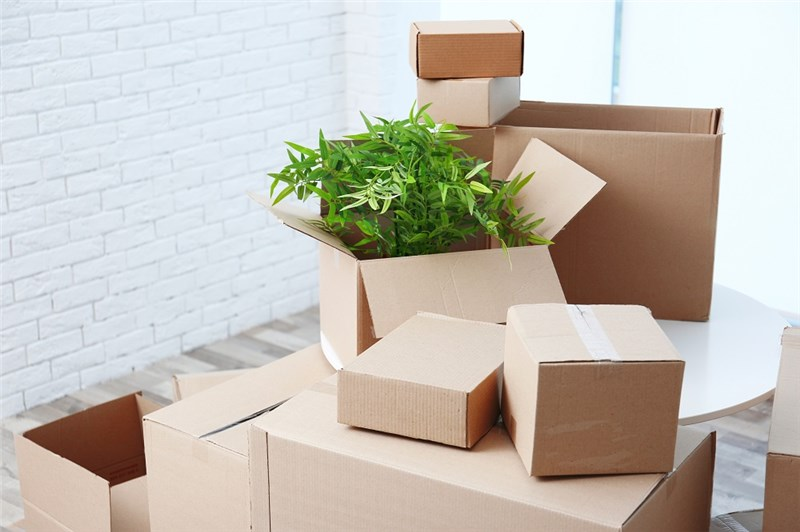 Planning a Move? Tips to Protect Your Plants