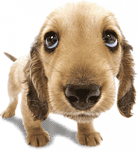 Moving Tips for Dog Owners