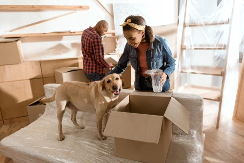 4 Tips for Moving With Pets