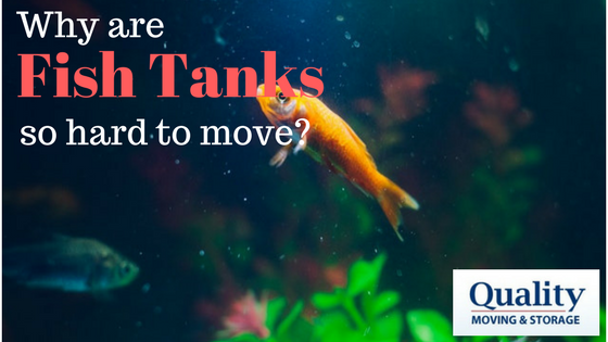 Why are Fish Tanks So Hard to Move?