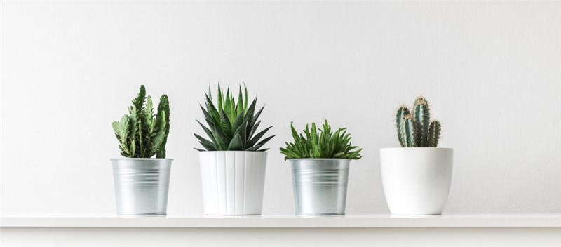 Tips for Moving with Household Plants