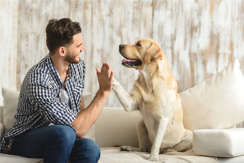 A Dog Owner's Guide to Moving Into a New Home