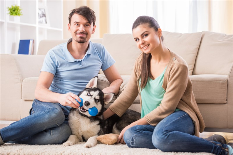3 Tips for a Smooth Move with Pets