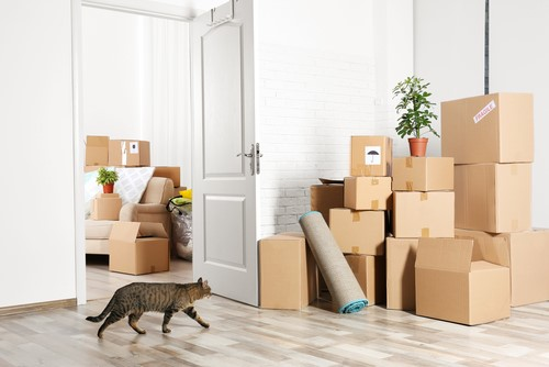Our Top Tips for Moving With Pets