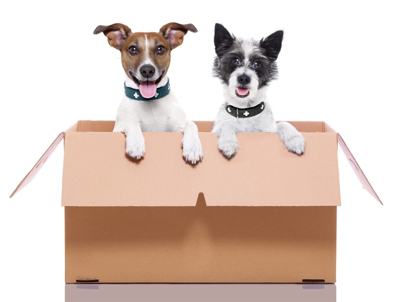 2 cute dogs in a moving box